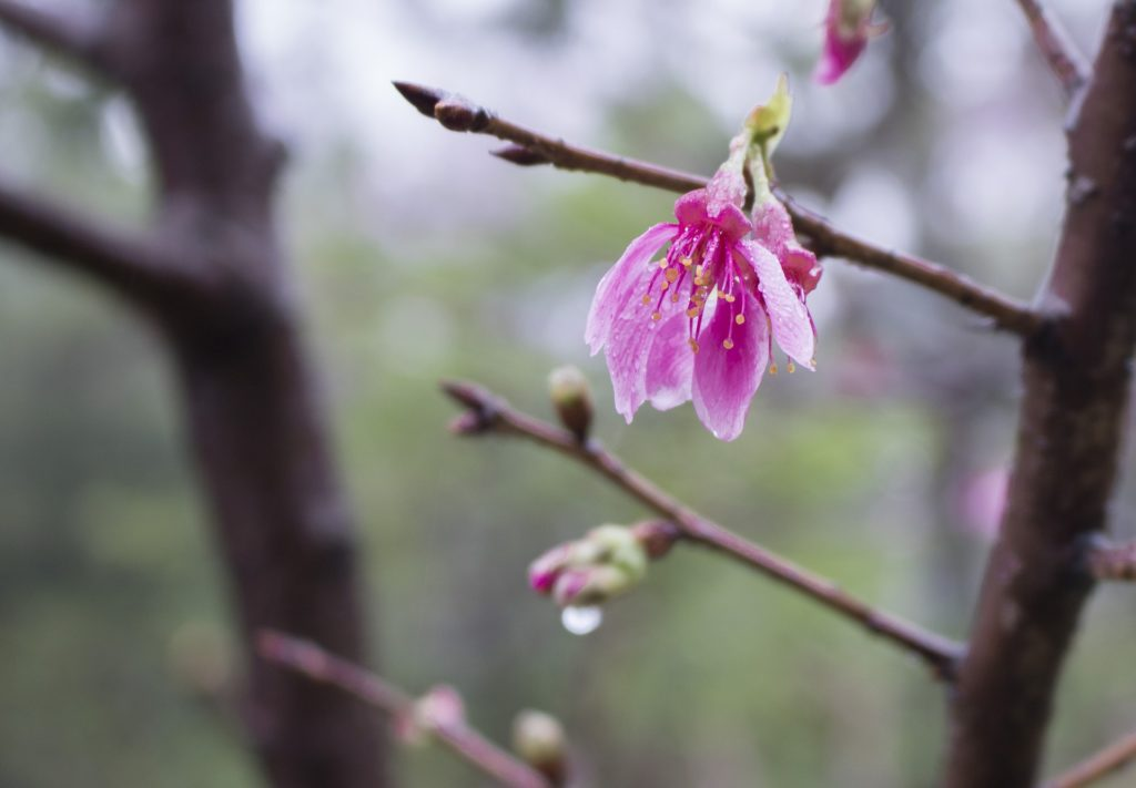 百人一首9番 「花の色は…」の意味と現代語訳