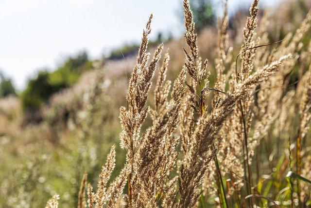 百人一首1番 「秋の田の…」の意味と現代語訳