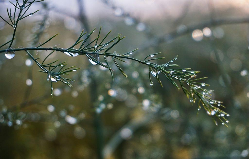 百人一首37番 「白露に 風の吹きしく 秋の野は つらぬきとめぬ 玉ぞ散りける」の意味と現代語訳