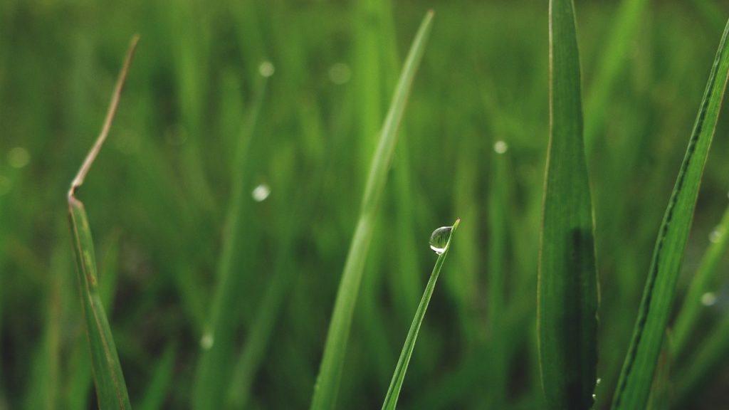 百人一首87番 「村雨の 露もまだひぬ まきの葉に 霧たちのぼる 秋の夕ぐれ」の意味と現代語訳