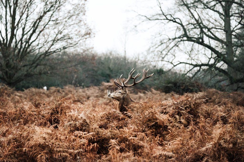 百人一首83番 「世の中よ 道こそなけれ 思ひ入る 山の奥にも 鹿ぞ鳴くなる」の意味と現代語訳