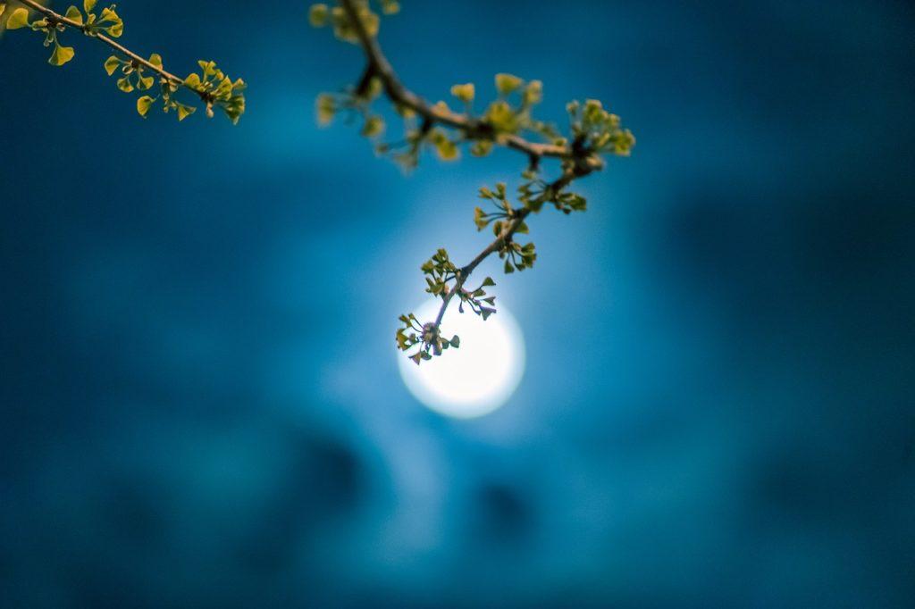 百人一首67番 「春の夜の 夢ばかりなる 手枕に かひなくたたむ 名こそをしけれ」の意味と現代語訳