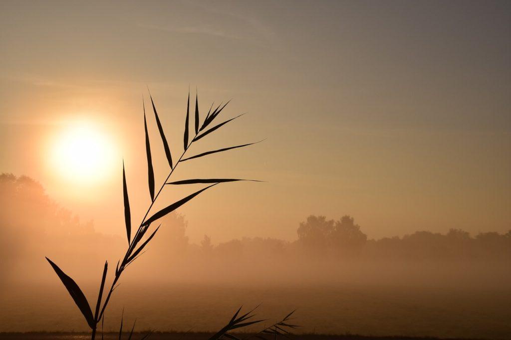 百人一首52番 「あけぬれば 暮るるものとは 知りながら なほうらめしき 朝ぼらけかな」の意味と現代語訳