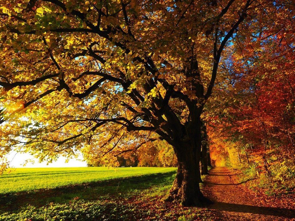 百人一首70番 「さびしさに 宿を立ち出でて ながむれば いづくもおなじ 秋の夕ぐれ」の意味と現代語訳